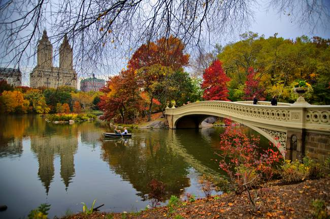 Autumnal Wonder within Central Park, NYC artwork.